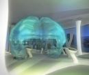 museo_evolucion_humana_36