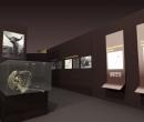 museo_evolucion_humana_48